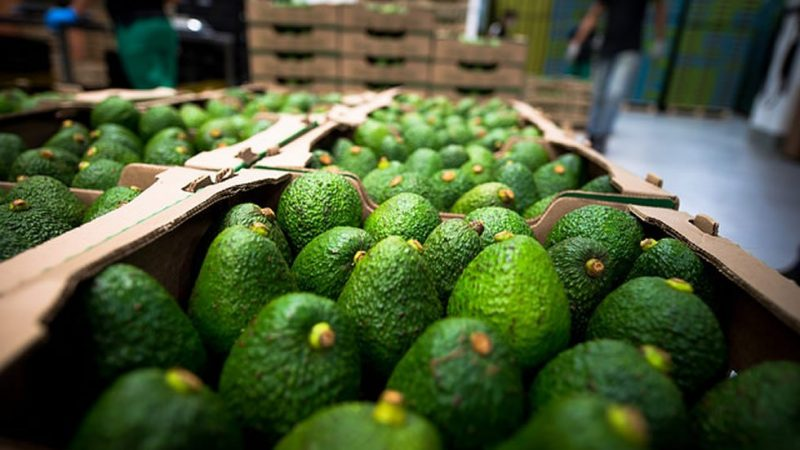 Colombia exportará aguacate Hass a Chile