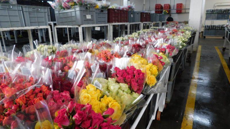 En plena pandemia millones de flores colombianas viajan por el mundo para San Valentín