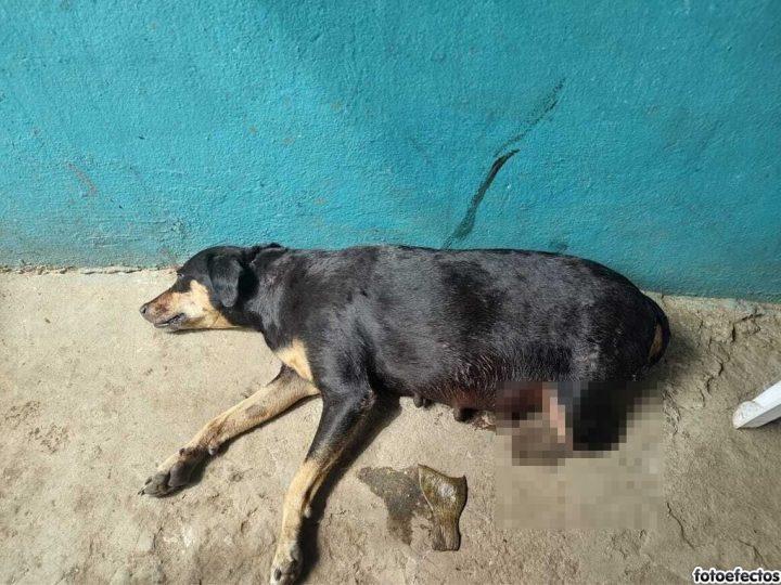 Policía captura a un hombre que le pagó un machetazo a una perrita en las patas en Córdoba