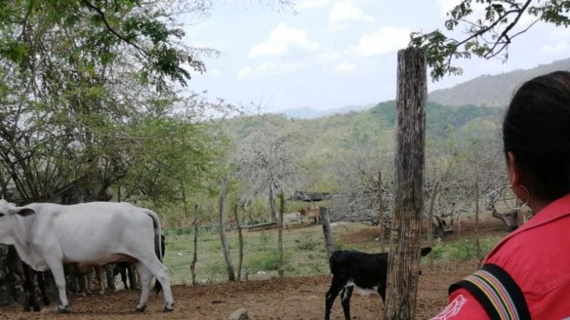 8 mujeres en proceso de reincorporación  lideran exitosos proyectos de ganadería en San Jacinto