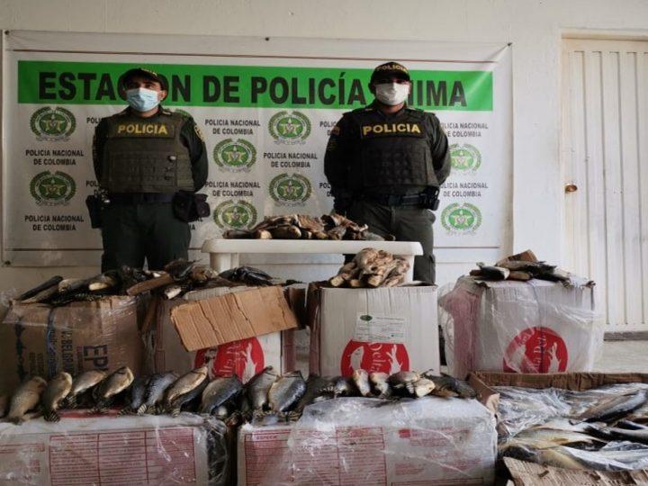 Policía incauta más de 200 kilos de pescado en mal estado que pretendían vender