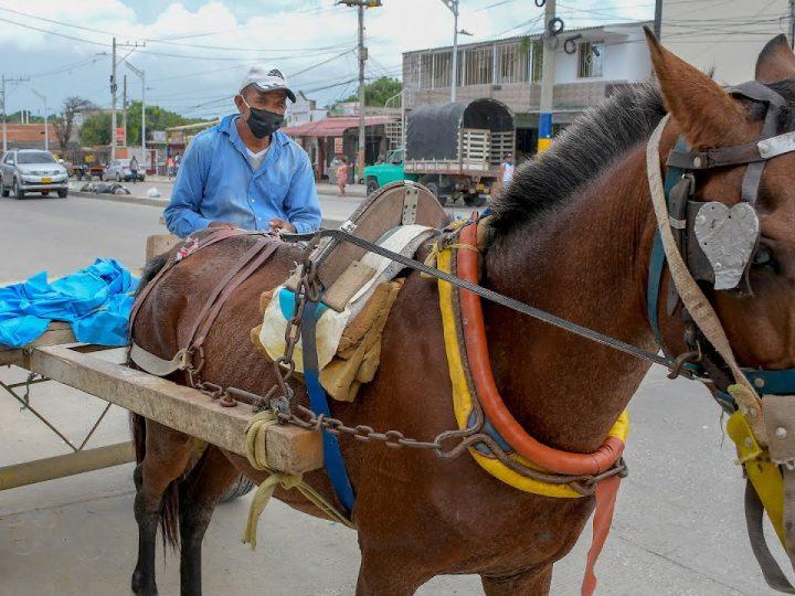 Senado prohíbe vehículos de tracción animal